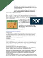 Formación Voleibol Educación Física