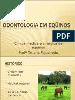 Odontologia Em Equinos