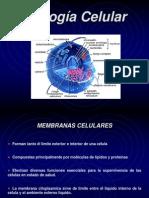 biologia_celular