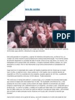 Biogas en Un Criadero de Cerdos