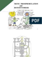 Ch19b Oksidatif Fosforilasyon Ve Fotofosforilasyon Yonca Duman