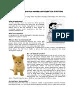 Kitten - Socialization and Fear Prevention