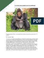 Gorila Gieco