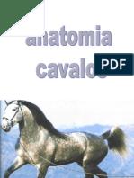 Anatomia de Cavalos