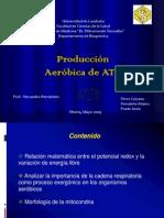 Produccion Aerobica Del ATP III