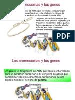 Cromosomas y Genes 2