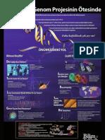 insan_genom_posteri