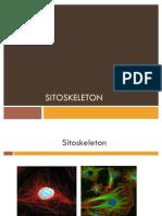 SITOSKELETON