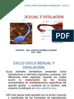 Ciclo_Sexual_y_[]vulación