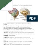Anatomy of the Brain (Alzeimer's Disease)