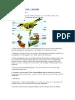 Characteristics of Class Aves