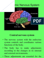 Autonomic Nervous System (Physiology)