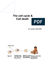 7.Lecture Apoptosis and Cell Cycle