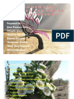 Xerophytic Plants and Their Adaptations