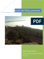 Adrián Pascual. Regeneración natural de Pinus pinaster Ait