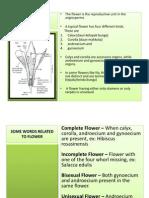 5. Plant Morphology_bunga