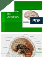 3anatomia Del Cerebelo