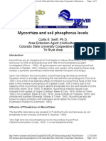 MycorrhizaAndSoilPhosphorusLevels