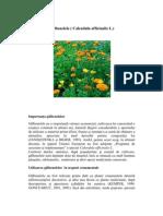 Tehnologia de Cultura Ecologica a Galbenelelor Auto Saved)