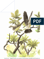 A Cryptic New Species of Flycatcher (Tyrannidae Suiriri)