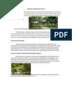 Berbagai Manfaat Hutan
