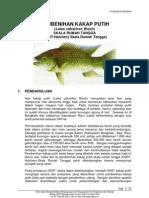 Pembenihan Ikan Kakap Putih HSRT