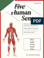 The Five Human Senses