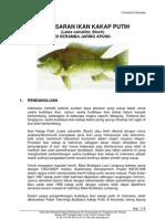 Pembesaran Ikan Kakap Putih