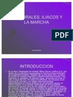 Temp or Ales, Iliacos y La Marcha