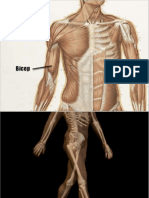 Anatomy for Artist A Images