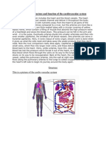 the cardio vascular system