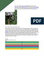 Primata Adalah Mamalia Yang Menjadi Anggota Ordo Biologi Primates