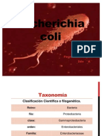 Echericha coli