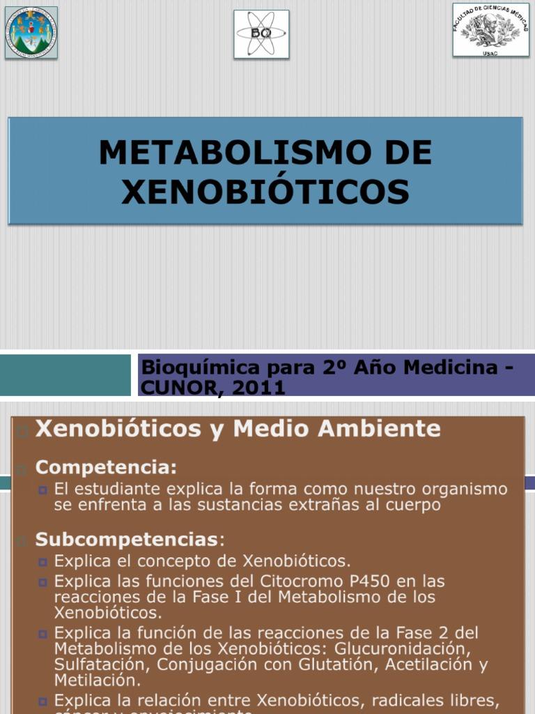 Cure esquema del metabolismo con la naturaleza