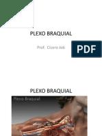 Plexo Braquial Aula Anatomia