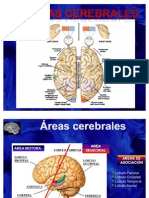 Areas Cerebra Les