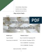 Rapport Final (2)