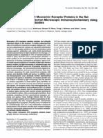 Steven M. Hersch et al- Distribution of m 1 -m4 Muscarinic Receptor Proteins in the Rat Striatum
