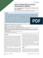 Karima Azdad et al- Homeostatic Plasticity of Striatal Neurons Intrinsic Excitability following Dopamine Depletion