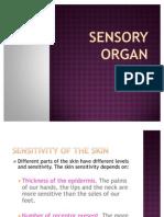 Sensory Organ