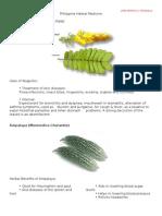 Philippine Herbal Medicine