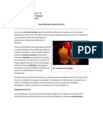 Guía válida para Examen de Física 1º Medio