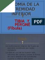 ANATOMÍA DE LA EXTREMIDAD INFERIOR