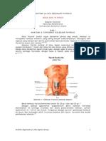 Anatomi Mega