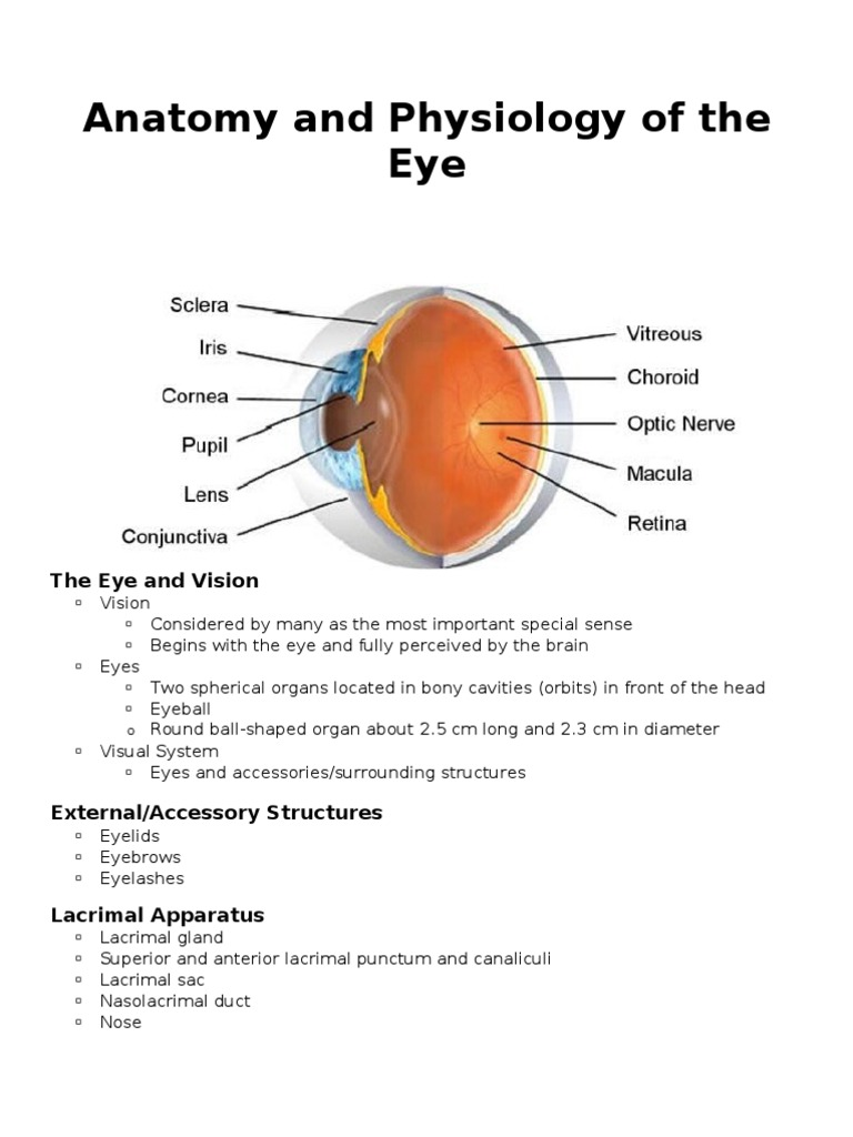 Anatomy and Physiology of the Eye | Cornea | Retina