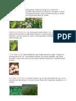 Betegségekre gyógymód,növények