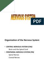 13.1  NEUROone