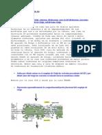 Biologia II. Parte Dos Doc