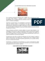 Caracteristicas Microbiologicas Del Treponema Pallidum