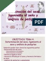 Determinacion Del Sexo